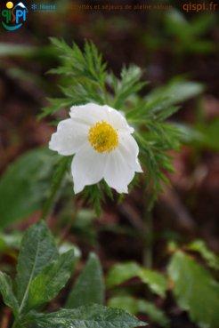 2015-05-26-Qispi-Jura_Leman-Dent_Vaulion-Vallorbe-IMG_9041