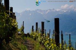 2015-05-27-Qispi-Jura_Leman-Lavaux-IMG_9152