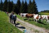2015-05-28-Qispi-Jura_Leman-Hautes_Combes-IMG_9273