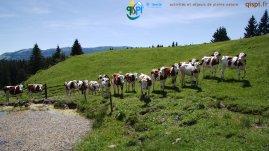 2015-05-28-Qispi-Jura_Leman-Hautes_Combes-IMG_9287