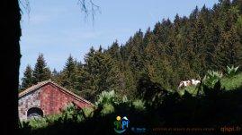 2015-05-28-Qispi-Jura_Leman-Hautes_Combes-IMG_9306