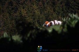 2015-05-28-Qispi-Jura_Leman-Hautes_Combes-IMG_9308
