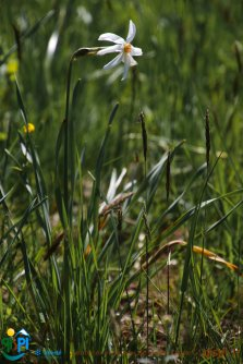 2015-05-28-Qispi-Jura_Leman-Hautes_Combes-IMG_9313