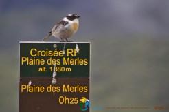 2015-11-07-La_Reunion-La_Nouvelle-Col_des_Boeufs-HellBourg-IMG_1931
