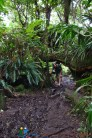 Forêt Primaire de Bélouve
