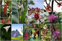 La_Reunion-fleurs