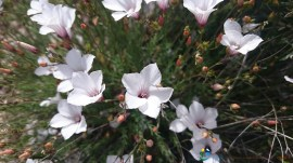 2016-06-11_12-qispi-WE_Ste_Victoire-Photos_Thomas-DSC_0072