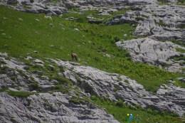 Chamois – Jour 2 – Tour du Marguareis – Juin 2016 – Trek, Rando, Italie