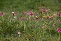 Pelouse d'orchidées – Jour 3 – Tour du Marguareis – Juin 2016 – Trek, Rando, Italie