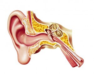 iStock-Ear-vestibular-bones-_000024467012Small-300x237
