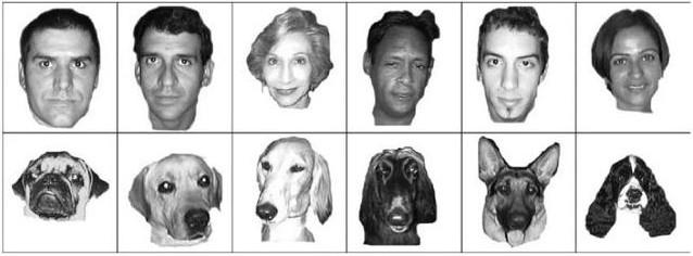 parecidos perros y dueños