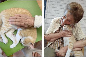 El gato que se coló en 40 vidas
