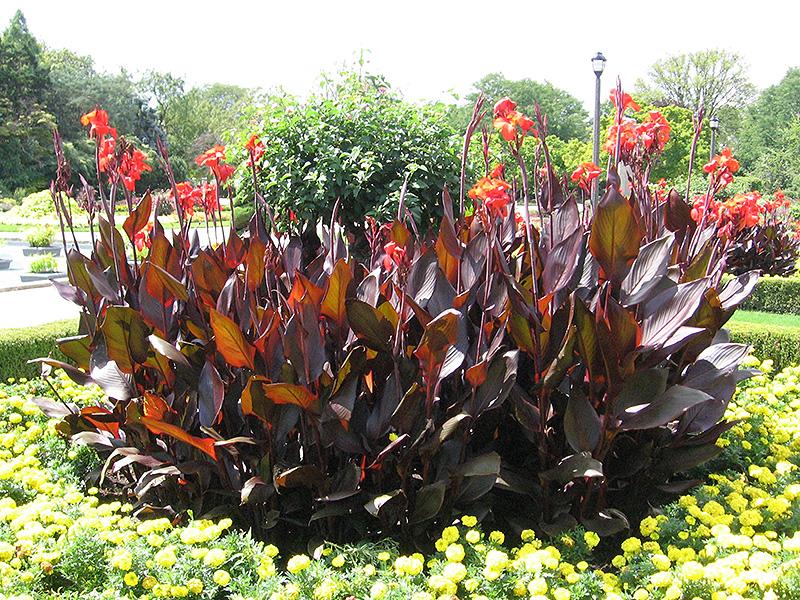 Red Garden Decor