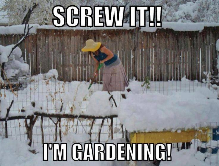 January ~ Seasonal Gardening Tips