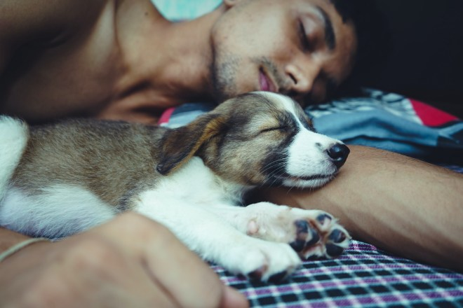 Shirtless man sleeps alongside a cute puppy. Both look comfortable and cozy.