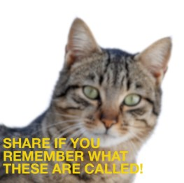 Hint: meow!