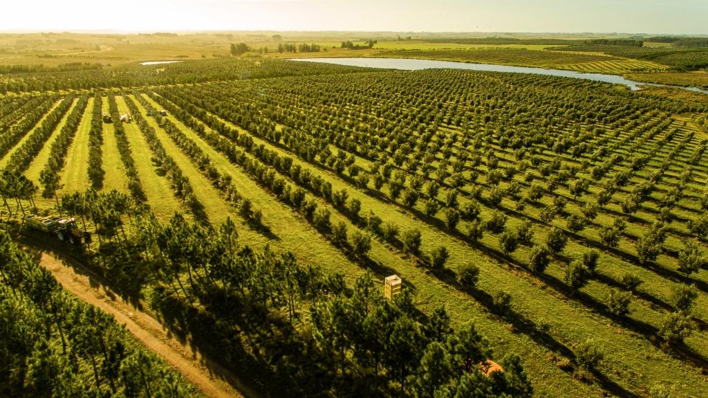 3 fazendas de azeite para conhecer em Punta del Este | Qual Viagem