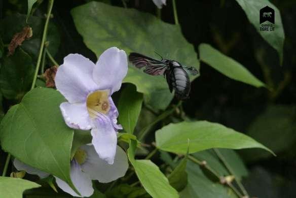 bourdon-fleur-vol