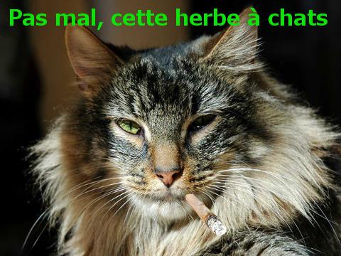 Lui, c'est pas mon chat. Le mien est bien plus moche