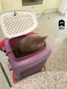 Chat niqué dans la cage
