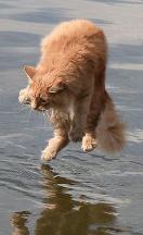 Chat jeté dans l'eau