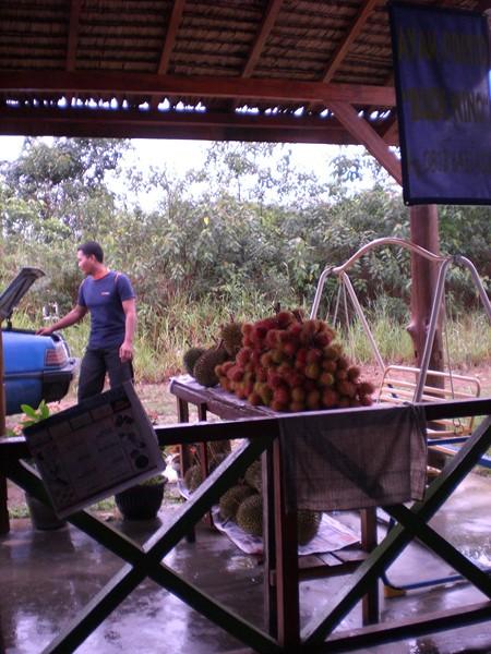 Le piège : choisir la facilité, les rambutans qui occupent la première place