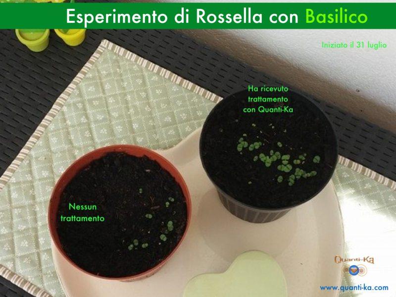 Esperimento di Rossella con il Basilico