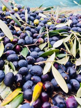 09lacasadigiovanni_olive
