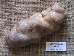 canellina