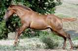 foalrunning