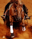 reininghorse