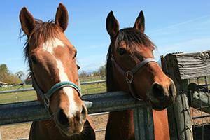 purina-horses-web