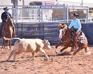 az-fall-champ-cattle