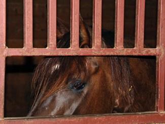 horseinstall