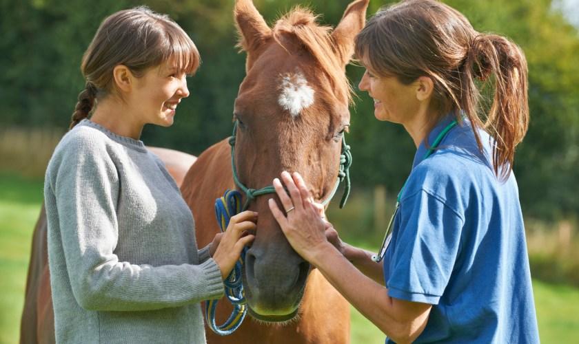 veterinarian examining a horse