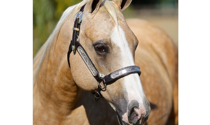 Horse standing in sunlight