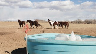 horses standing by frozen water trough