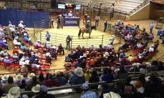 People at a Horse Auction