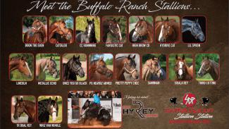 SDP Buffalo Ranch stallion roster