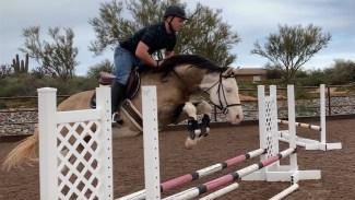 Pale Taschka, a Warmblood Quarter Horse cross, jumping