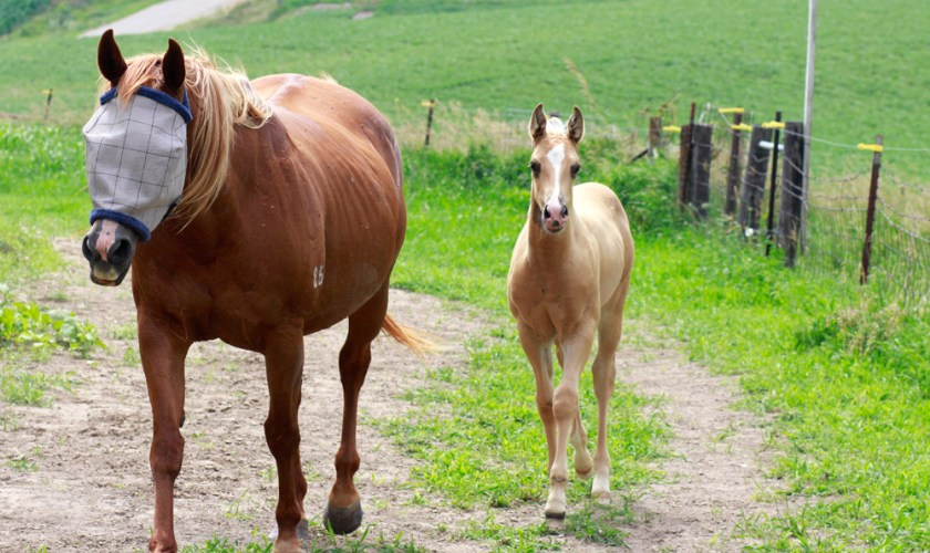 equine biosurveillance program started in canada