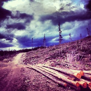quastuco-silviculture-tree-planting-penticton-photo-contest-entry-17