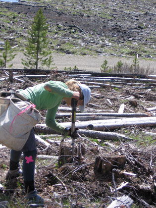 Job postings for tree planter, Quastuco Silviculture.