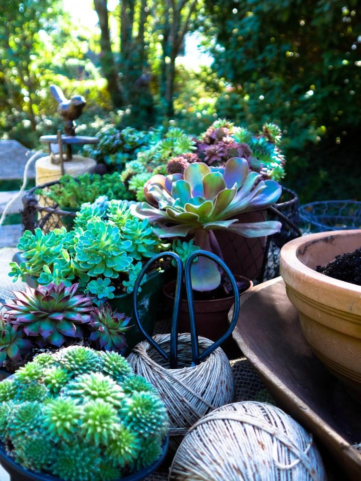 couronne succulentes (3)