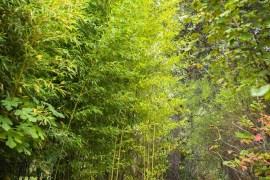 Le trèfle blanc nain, une alternative au gazon - Magali ANCENAY Photographe Culinaire