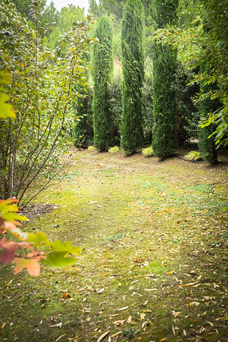le tr fle blanc nain une alternative au gazon quatre saisons au jardin. Black Bedroom Furniture Sets. Home Design Ideas
