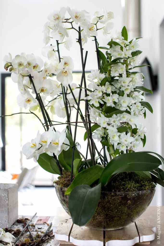 rempotage-orchidées