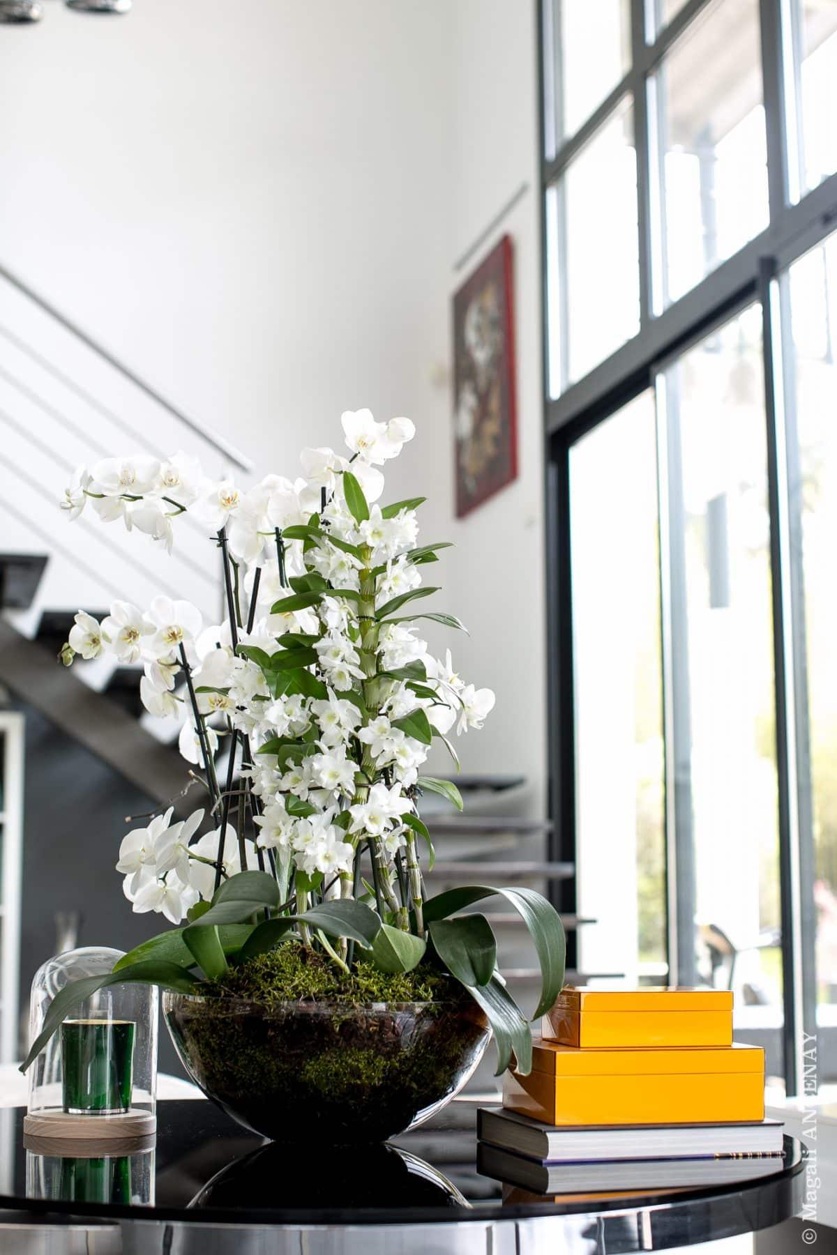 Orchidée Phalaenopsis - Quatre Saisons Au Jardin
