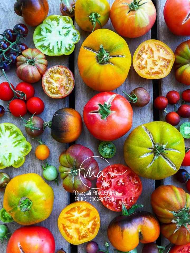 Diversité des formes et des couleurs - Quatre saisons au jardin
