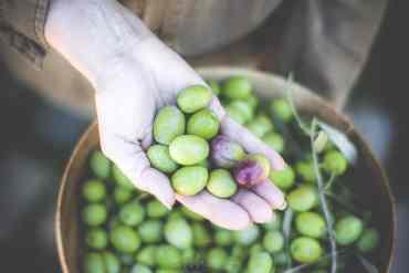 Recette facile des olives cassées